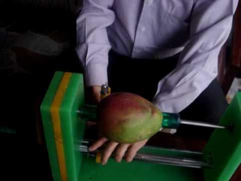 Funcionamiento Peladora de Mango