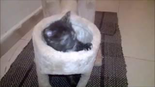 Divertentissima gattina
