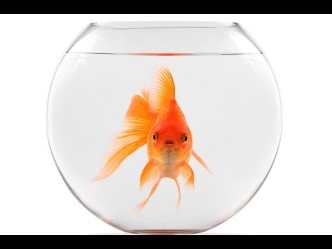 Van Morrison - Goldfish Bowl