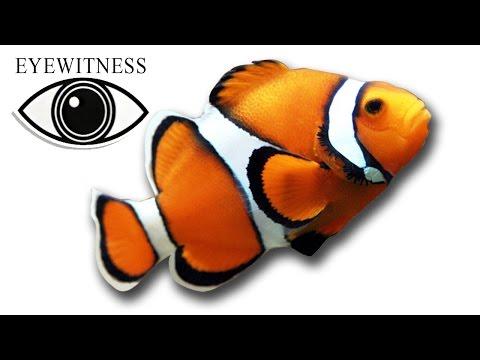 EYEWITNESS   Fish   S1E7