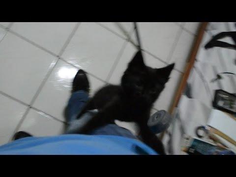 Salem o gato - Subindo pela calça
