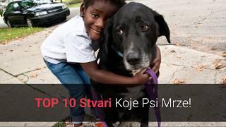 🐕 Što Psi Mrze? Top 10 Stvari Koje Ljudi Rade Psima, A Psi Ih Mrze!
