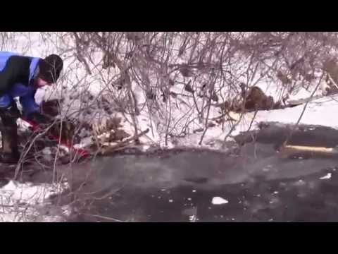 Under ice beaver trapping