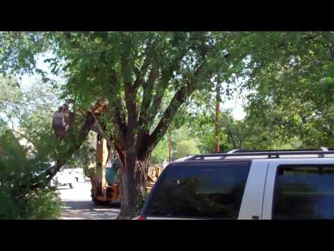 City Removes Tree Limb Menard TX