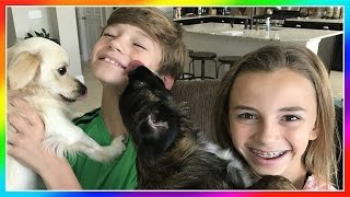 OUR PUPPIES ARE BACK HOME! | WE TRY WEIRD CANDY