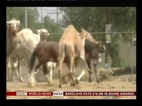 Mexico introduces ban on circus animals