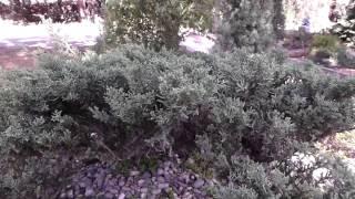 #5892, Pequeño bonsái se mueve con el viento [Raw], Plantas ornamentales