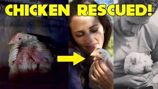 WE RESCUED A CHICKEN FROM A SLAUGHTERHOUSE | The Story of Patty