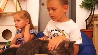 Сюжет ТСН24: Как живут кошки в тульском муркафе
