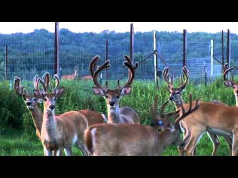 Wild Rivers Whitetails - These Deer Are