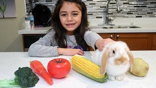 Kids Pretend Play with Food Toys! Johny Johny yes papa Nursery Rhymes Song for children