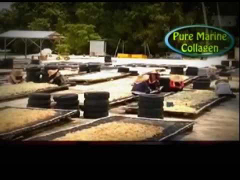 Khasiat Rumpai Laut Sabah Khasiat Rumpai Laut/pure