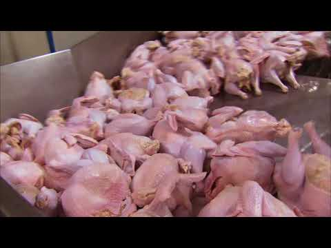 Turkey Farm & Processing Plant Tour: Temple Grandin