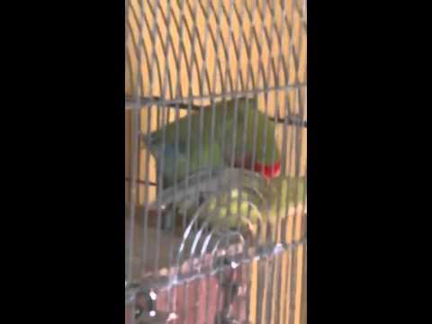 Parrot porn