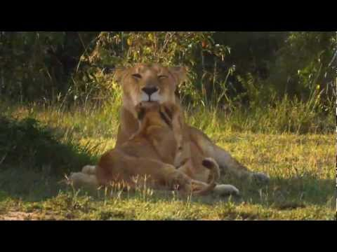 African Cats (Original Composition)