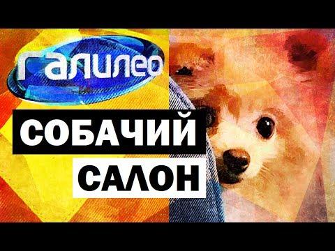 Галилео. Собачий салон 🐶 Canine salon