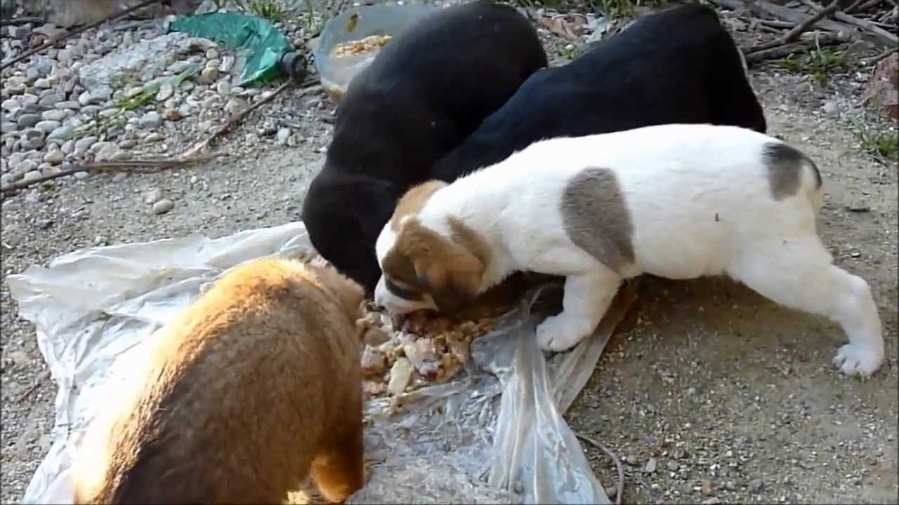 Cute stray dogs
