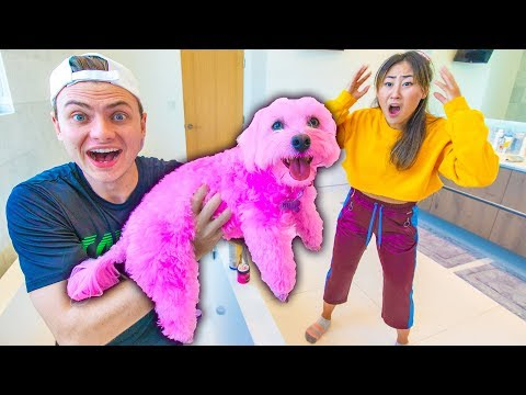 I DYED HER DOG PINK!! (PERMANENT)
