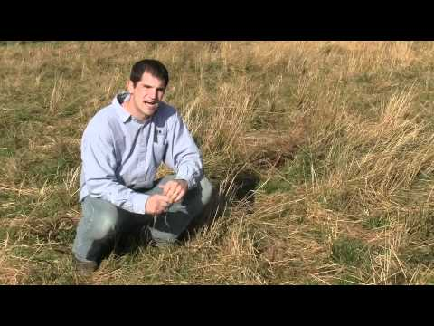 Millborn Seeds' Calving Pasture Mix