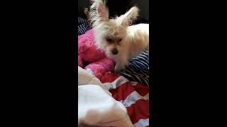 Dizzy the dog and lesbian bear first porn video