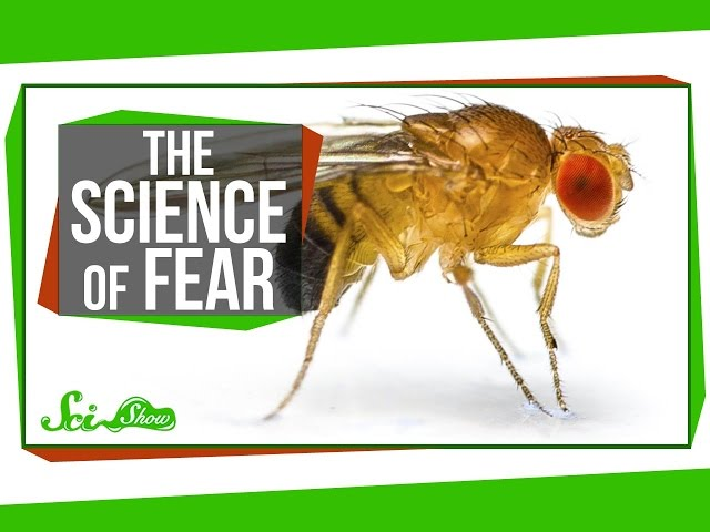 Seasonal Genes & The Science of Fear