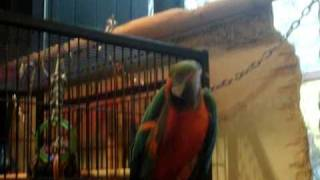 Merlin The Parrot :)