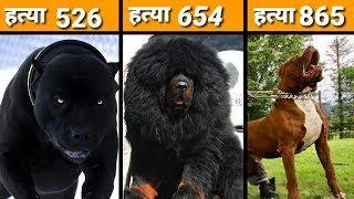ये हैं दुनिया के सबसे खतरनाक कुत्ते अपने मालिक के भी सगे नहीं होते  MOST DANGEROUS DOGS BREEDS