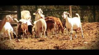 EL Rm   Novia de Rancho  video Official