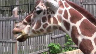 The Maryland Zoo & You (Education)