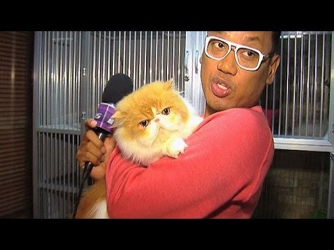 Puluhan Kucing Peliharaan Uya Kuya - Intens 10 Januari 2014