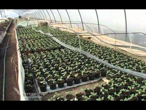 Proizvodnja rasada povrca u Saraorcima - U nasem ataru 373.wmv