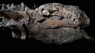 15 Most AMAZING Recent DISCOVERIES
