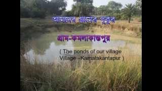 Ponds in Kamalakanta Pur (Bangla)