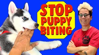 How To Train Your Puppy to STOP BITING You! 3 Things That WILL Work! Professional Dog Training
