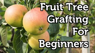 grafting fruit trees fruit ninja games