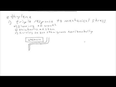 Biology: Plant hormones