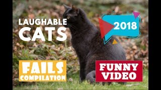 Laughable cats compilation #401   2018 ★ 7 second of happiness FUNNY Video 😂