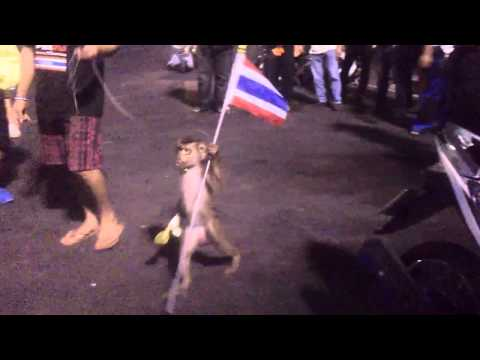 Monkey with Thailand flag protest against government on Democracy Monument in Bangkok