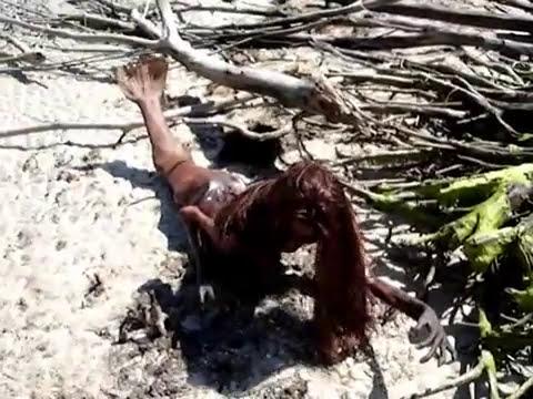 Cadáver de Sereia encontrada na Praia da Flórida - Fort De Soto, em St. Petersburg