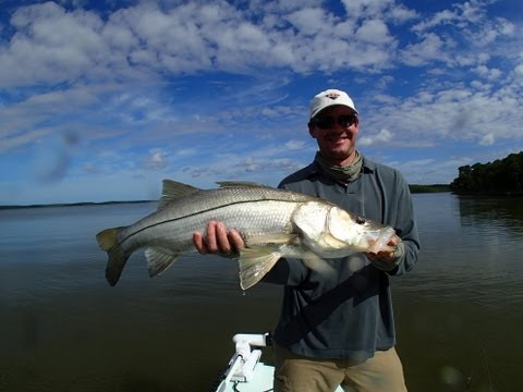 Fly Fishing Everglades Tarpon, Snook and more footage