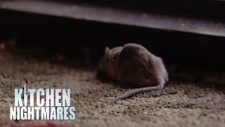 Gordon Accused Of Planting Dead Mouse At Restaurant Door Kitchen Nightmares