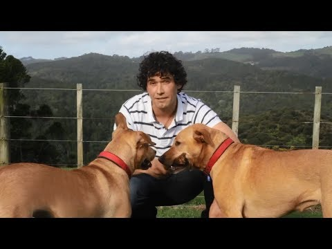 How To Train A Dog? Online Dog Training Tips By Professional Dog Trainer video