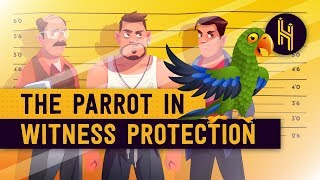 Why This Parrot is in Witness Protection