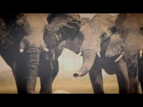 Assistir documentários completos dublados O Extermínio do Marfim completo dublado 2016