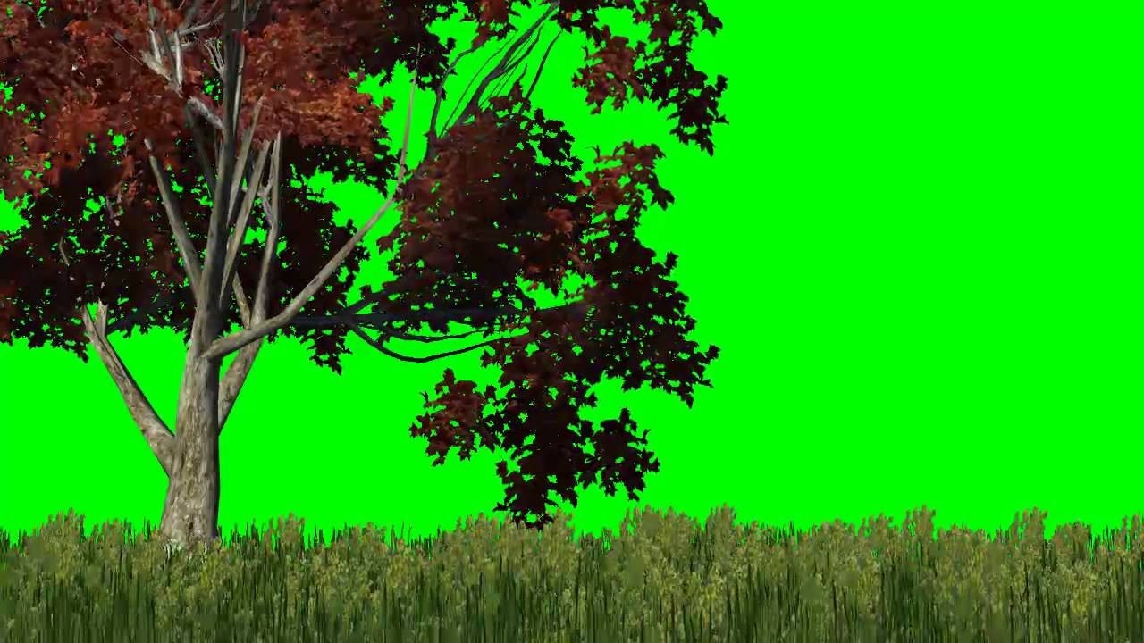Meadow With Red Tree In The Wind Green Screen Effects