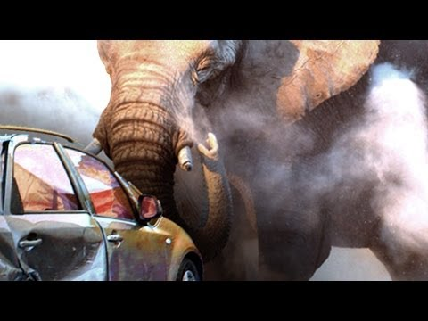 Elephant Crushes Our Car - On African Safari [Exclusive Video]