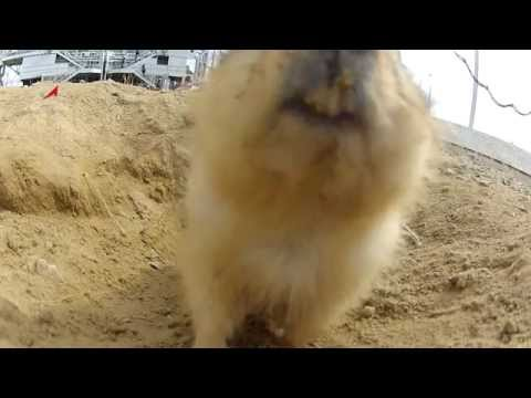 Space Launch Gopher - Funny Music Videos