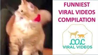 LOL VIRAL VIDEO 14th Nov 2018
