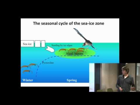 NPI seminar: Petrels track the spring bloom phenology in the Antarctic Ocean