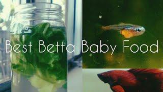 (Tamil)-Infosuria Starter culture-Cheap and Best food forBETTA BABIES-Eshwar Gandhi-Watch full video